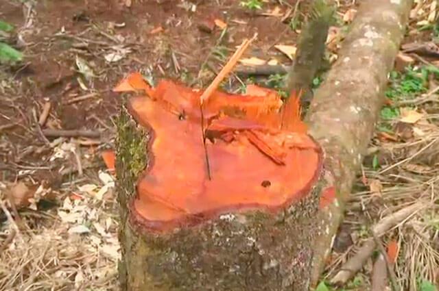 Armados con motosierras, invasores están talando reserva natural en Villavicencio - Noticias Caracol